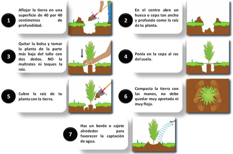 plantar-mi-propio-arbol