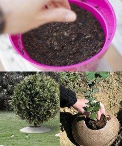 proceso-cenizas-semilla-para-plantar-un-arbol